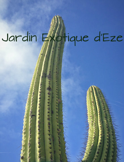 Jardin Exotique d'Eze.jpg